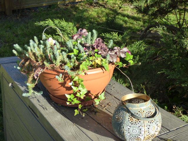 Petite plante au Coeur des Vignes Pauillac
